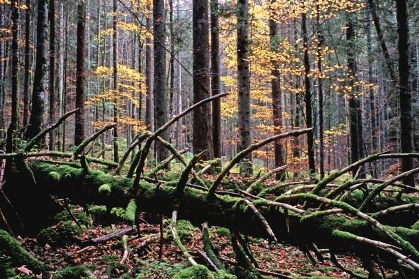 Árboles caídos en el interior de un bosque