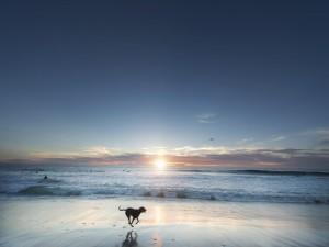 Perro corriendo en la playa