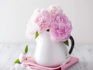 Peonías rosadas en un florero blanco