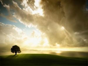 Rayos de sol iluminando un árbol y el mar