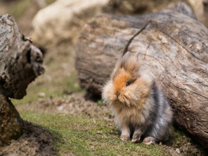 Un bonito conejillo de Indias