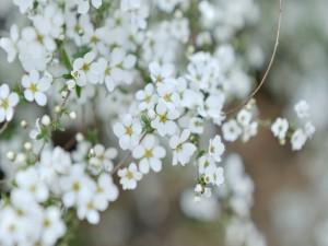 Florecillas blancas en las ramas