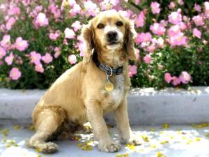 Perro junto a unas flores