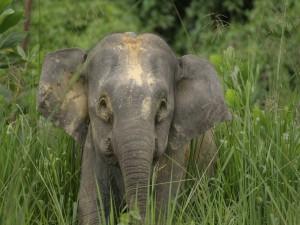 Pequeño elefante entre la hierba