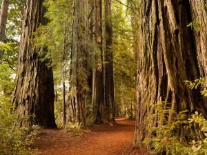 Bosque de grandes árboles