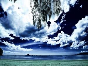 Las ramas de un árbol y nubes sobre el mar