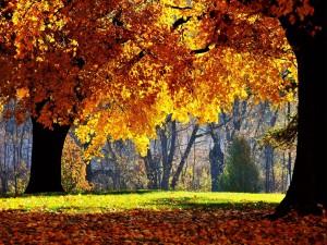 Árboles con hojas otoñales
