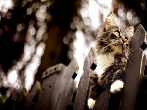 Gato sobre una valla de madera