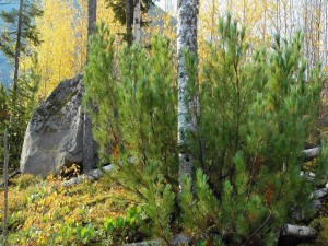 Roca entre los árboles de un bosque