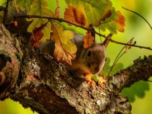 Ardilla en un árbol otoñal