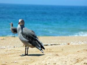 Aves en una playa