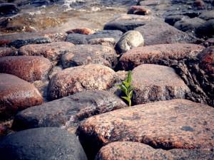 Planta creciendo entre unas piedras