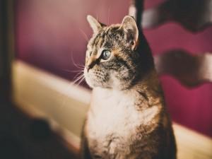 Un gato pensativo