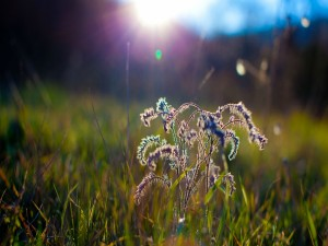 Sol iluminando a una planta sobre la hierba