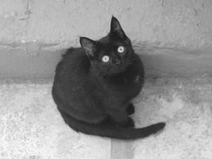 Un gato negro callejero