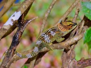Camaleón de bonitos colores sobre una rama