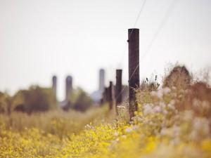 Flores silvestres junto a una valla