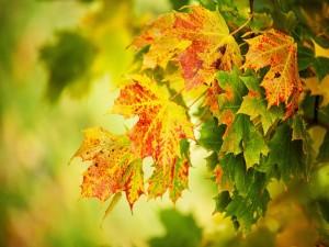 Hojas al comienzo del otoño