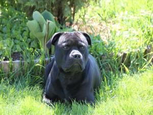 Perro tumbado sobre la hierba