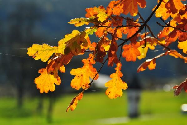 Telarañas sobre las hojas otoñales de un árbol