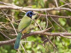Un colorido pájaro posado en una rama