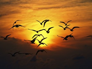 Aves volando al atardecer