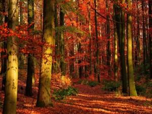 Un bonito bosque en otoño