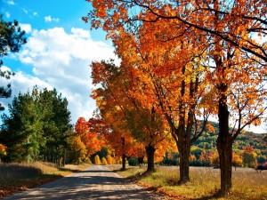 Carretera entre árboles otoñales
