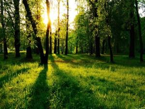 Hierba verde en el bosque