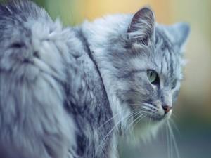 Bonito gato gris con ojos verdes