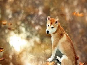 Perro sobre un charco en otoño