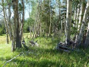 Verano en el bosque