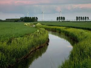 Turbinas de viento junto a un río rodeado de hierba