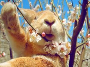 Conejo entre las ramas de un árbol en primavera