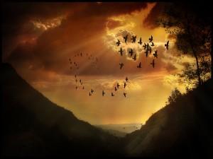 Una bandada de pájaros en el cielo