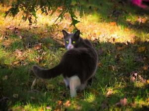 Gato caminando sobre la hierba en otoño