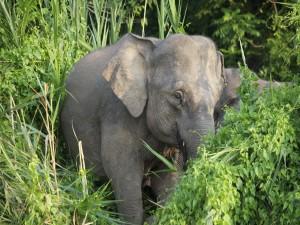 Elefante entre las plantas