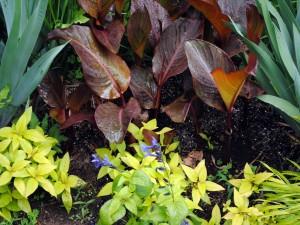 Plantas mojadas