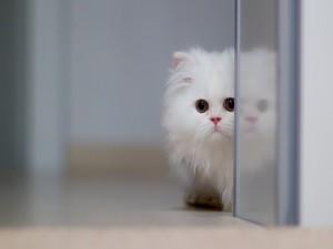 Un gatito blanco