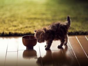 Gatito junto a un cuenco
