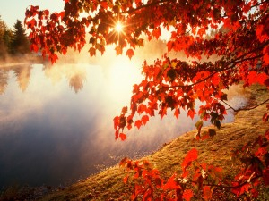 Sol brillando sobre un lago en otoño