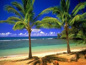 Playa con pequeñas palmeras