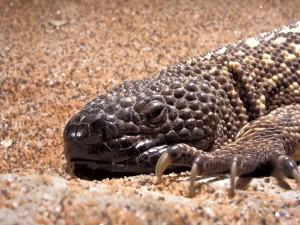 Un gran lagarto visto de cerca