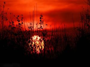 El sol se oculta detrás de las plantas