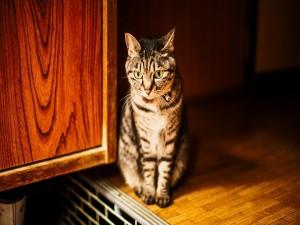 Gato de ojos verdes sentado