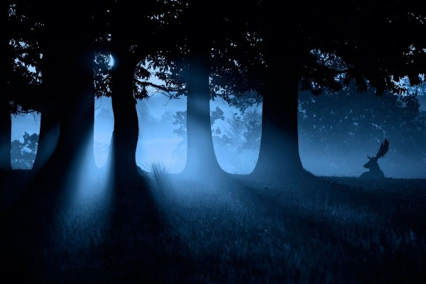 Ciervo en un bosque al caer la noche