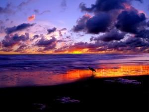 Ave caminando sobre la orilla al amanecer