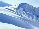 Árboles y montañas cubiertos de abundante nieve