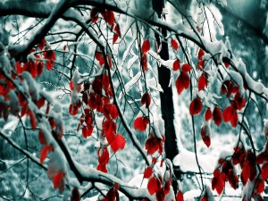 Nieve sobre las ramas y hojas rojas