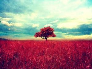 Árbol rojo en el campo